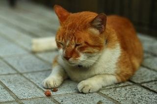 猫 眠い.jpg